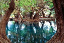 Agua y árboles
