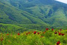 цветы крым