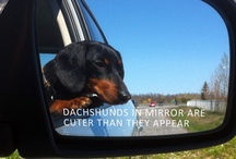 Weenie Fest! / I love my Wieners and Wiener mixes! What can I say? We like 'em long and low. LOL / by Nikki Atkinson