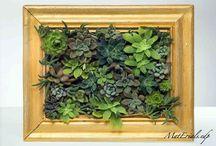 quadro succulente