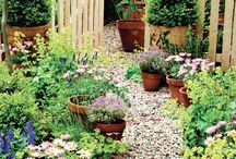 Cottage garden / Ideas for planting.