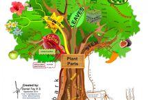 Natural World Infographics