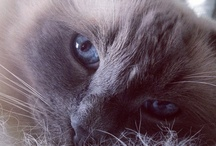 Felidae / meow  / by 🌺💐 🌸