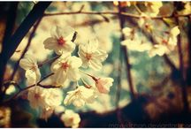 spring / inspiration