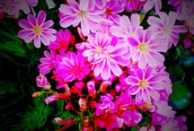 Nature / Colorful nature: flowers, trees or/and leaves