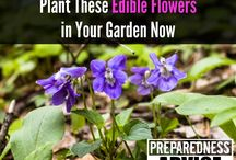 "Wild Plants & Foraging / Learn how to identify and use medicinal and edible wild plants by foraging for wild flowers, herbs, dandelions, echinacea, witch hazel, slippery elm and many others. Get weekly ""Best of Preparedness Advice"" here --> http://bit.ly/2tRRzuy"