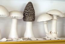 Style File - Mushrooms