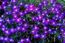 Les belles idées jardin ça se partage / Parce que les belles idées ça se partage, Emma de Jardin Express a épinglé pour vous ces images qui vont vous inspirer pour fleurir vos jardins, terrasses, balcons.