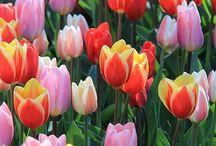 bunga yg indah