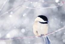 Animales / Todas las imagenes de animales de Pinterest