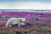 WWF Wildlife
