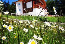 Di sole e di azzurro / Immergersi nella Natura riscoprendo le cose semplici! Corri a piedi nudi nell'erba , inebriati del profumo dei fiori...