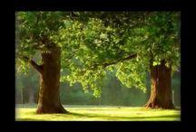 magie stromů