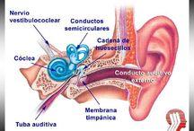 Audiología y audífonos / La salud auditiva