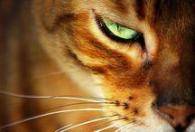 Cats / by Melba Herrera