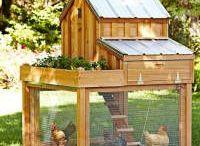 bahçede tavuk kümesi