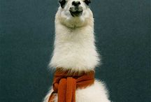 its a llama world and we just live in it
