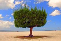 Trees / by Bo Tamaki