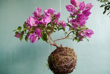 Kokedama & Bonsai / Everything about the Japanese artforms of Kokedama, Bonsai and everything in between..