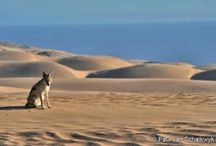 Namibia / We love this diverse country on Africa's southwest coast. Get off the beaten path and experience an unforgettable adventure!