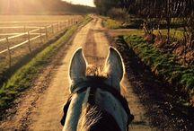 Horseback Ridding / Доска про конные прогулки в Пайн Ривер и во всем мире
