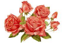 róże vintage