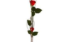 Fleurs rouges / Le rouge : amour, passion, chaleur, triomphe.