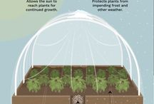 uprawa pod folia