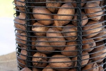 Pecans / Beautiful images of the pecan nut