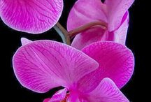 Radiant Orchid / Pantone Color of 2014. Everything radiant orchid we love!
