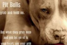 the dogs the pitbulls