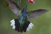 colibri :)