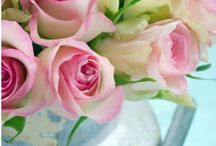My Love of Roses / by My Rosie Cottage