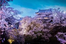 Top 7 Wonders of ... / About the Top 7 Wonders of Japanese people, places, and things.