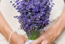 Lavender~The Purple Beauty / by ZombieGirl