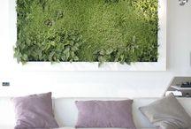 Planting - Vertical Gardens