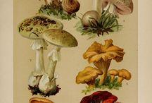 Mushroom searies