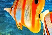 Beautiful marine life.