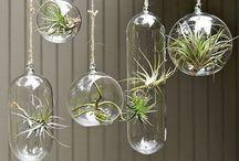 Plant stuffs