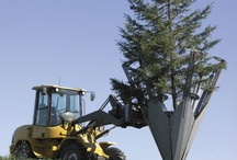 Деревья и кустарники / Статьи о декоративных деревьях и кустарниках для Вашего сада.