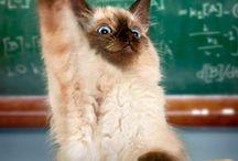 Kočky  - cat / kočičiny kočičí   :)