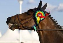 Gulf Coast Charity Horse Show
