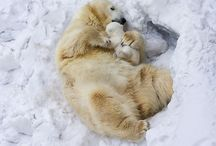 Cute and cuddly / Things that make you go 'aawww'