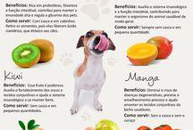 Alimentação canina