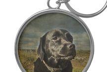 Labrador Sugus / Black lab Sugus