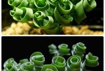 succulents we would like to have