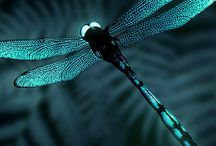 Dragonflies / The dragonfly symbolise the wisdom of transformation and adaptability in life. As spirit animal, the dragonfly is connected to the symbolism of change and light. It reminds you to bring a bit more lightness and joy into your life. Those who have this animal as totem may be inclined to delve deep into their emotions and shine their true colors.