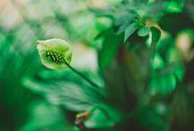 Green Roumania