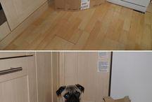 Pug forts