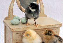 Chicks ^^